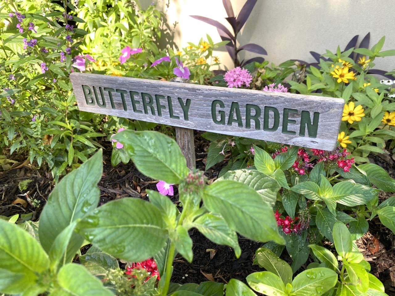 plants and Butterfly Garden sign